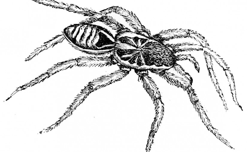 #Wizardry8 #TLDR #Tactics #8 : Squatting Spiders! (Don't tell PETA)